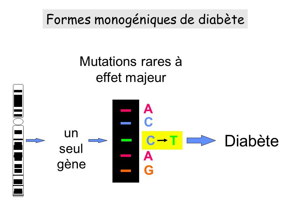un seul gène Mutations rares à effet majeur Diabète A A C C T G Formes monogéniques de diabète