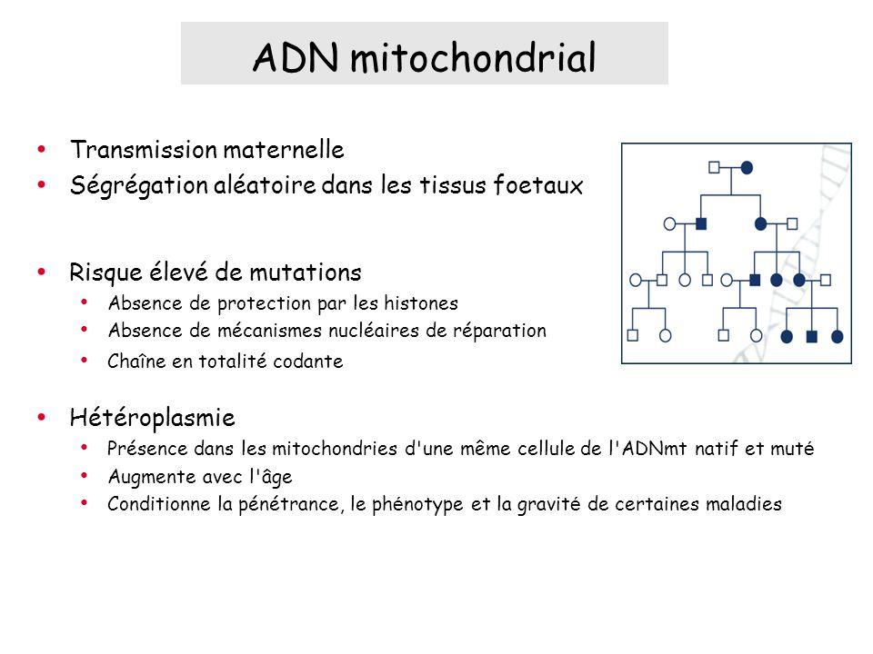 Transmission maternelle Ségrégation aléatoire dans les tissus foetaux Risque élevé de mutations Absence de protection par les histones Absence de mécanismes nucléaires de réparation Chaîne en totalité codante Hétéroplasmie Présence dans les mitochondries d une même cellule de l ADNmt natif et mut é Augmente avec l âge Conditionne la pénétrance, le ph é notype et la gravit é de certaines maladies ADN mitochondrial