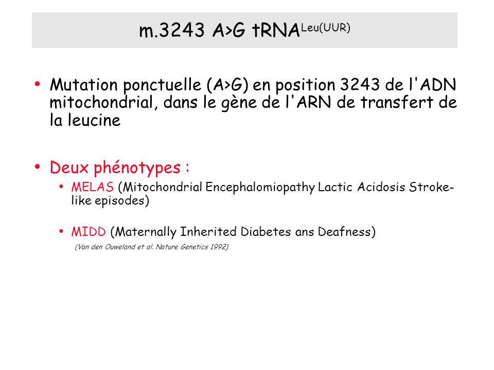 m.3243 A>G tRNA Leu(UUR) Mutation ponctuelle (A>G) en position 3243 de l ADN mitochondrial, dans le gène de l ARN de transfert de la leucine Deux phénotypes : MELAS (Mitochondrial Encephalomiopathy Lactic Acidosis Stroke- like episodes) MIDD (Maternally Inherited Diabetes ans Deafness) (Van den Ouweland et al.