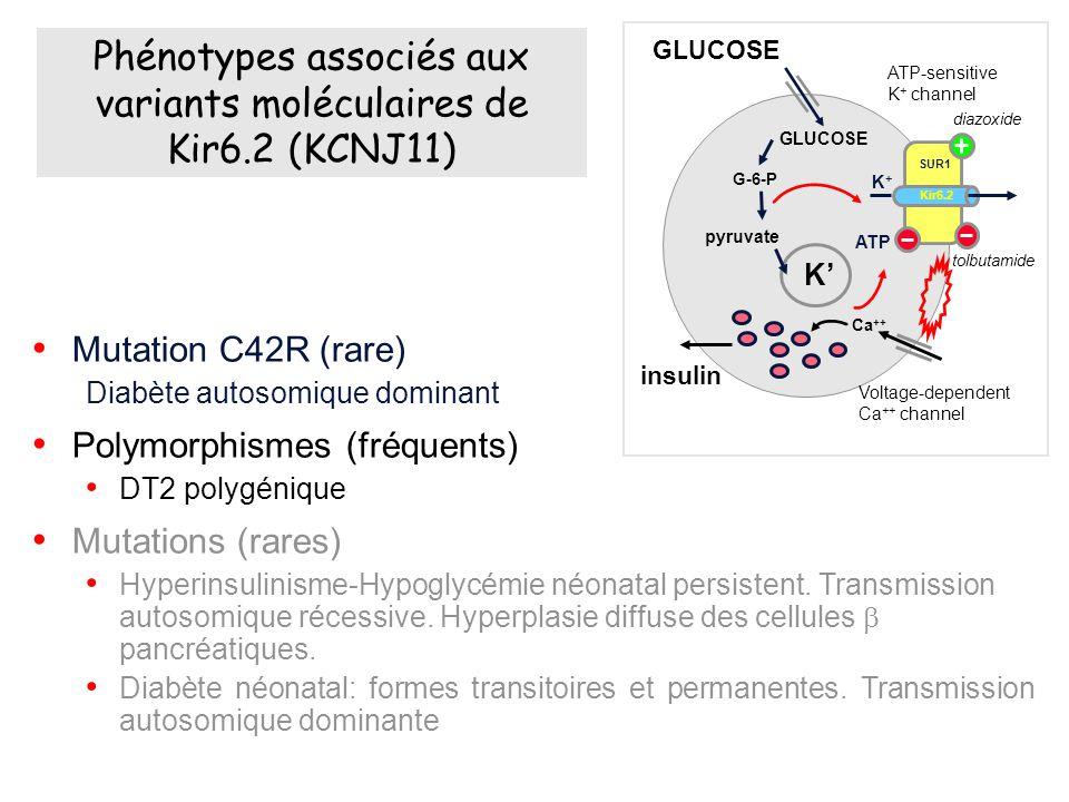 Mutation C42R (rare) Diabète autosomique dominant Polymorphismes (fréquents) DT2 polygénique Mutations (rares) Hyperinsulinisme-Hypoglycémie néonatal persistent.