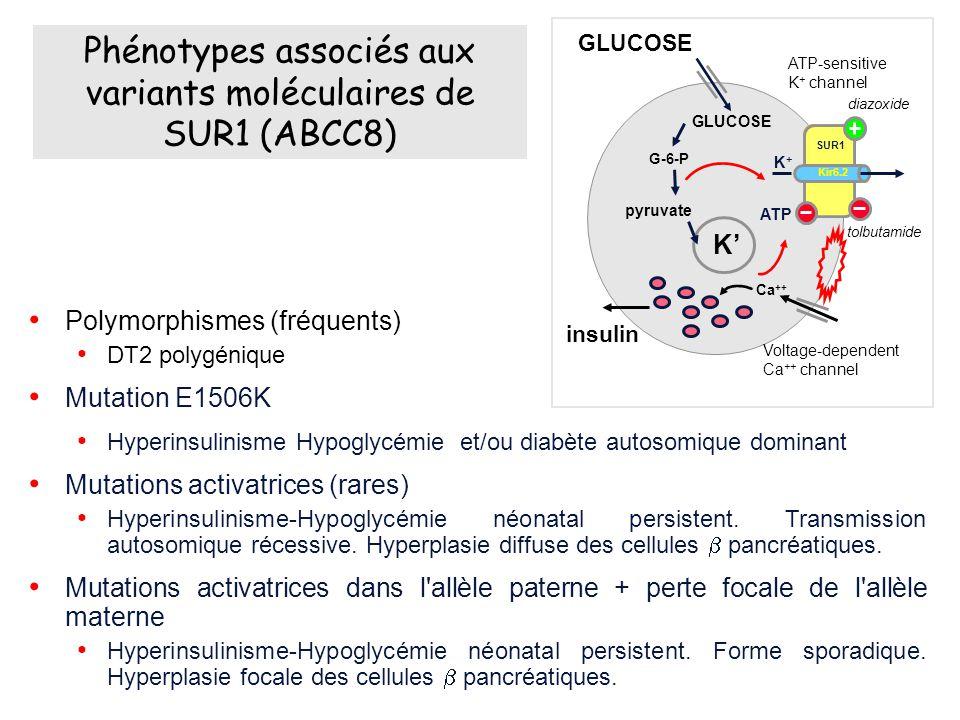 Polymorphismes (fréquents) DT2 polygénique Mutation E1506K Hyperinsulinisme Hypoglycémie et/ou diabète autosomique dominant Mutations activatrices (rares) Hyperinsulinisme-Hypoglycémie néonatal persistent.
