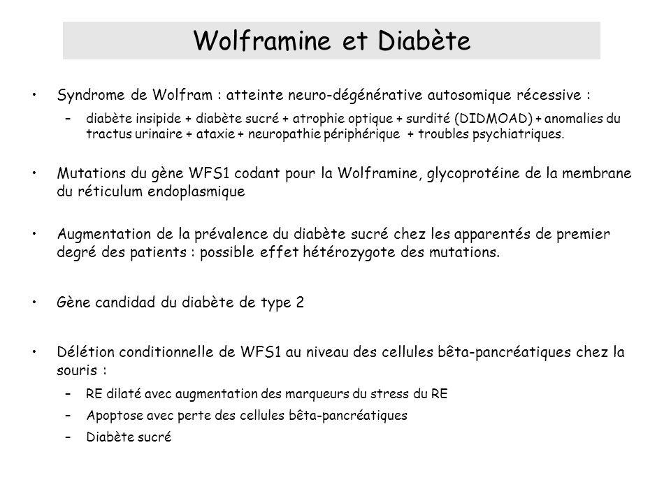 Syndrome de Wolfram : atteinte neuro-dégénérative autosomique récessive : –diabète insipide + diabète sucré + atrophie optique + surdité (DIDMOAD) + anomalies du tractus urinaire + ataxie + neuropathie périphérique + troubles psychiatriques.