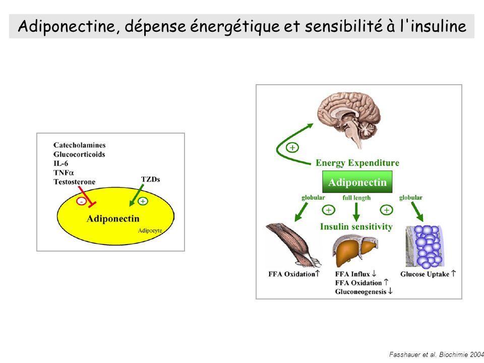 Adiponectine, dépense énergétique et sensibilité à l insuline Fasshauer et al.