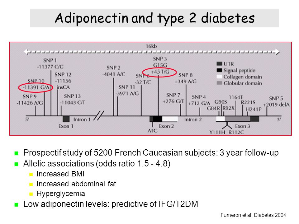 Adiponectin and type 2 diabetes Prospectif study of 5200 French Caucasian subjects: 3 year follow-up Allelic associations (odds ratio 1.5 - 4.8) Incre