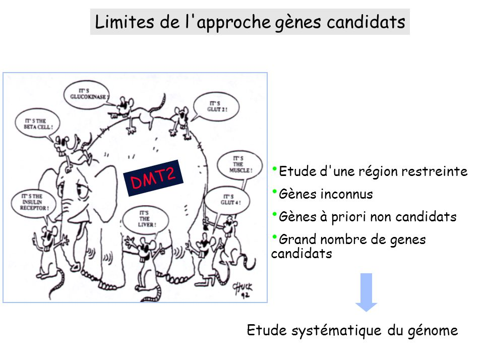 Limites de l approche gènes candidats Etude systématique du génome DMT2 Etude d une région restreinte Gènes inconnus Gènes à priori non candidats Grand nombre de genes candidats