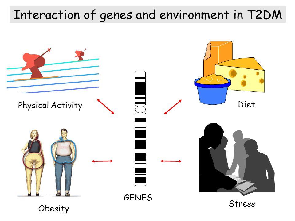 Déterminants génétiques de la sécrétion d insuline : voies impliquées dans les diabètes 1 - Phosphorylation du glucose - GCK 2 - chaîne respiratoire mitochondrial - mtDNA, UCP2 3 - Canaux potassiques dépendants de l ATP - Kir6.2, SUR1 4 - Facteurs de transcription - HNF1A, HNF4A, HNF4A TCF7L2 … 5 - Stress du réticulum endoplasmique - Pancreatic EIF2-a kinase (PERK), Wolframine, Insuline Sécrétion d insuline en réponse au glucose Bell et al.