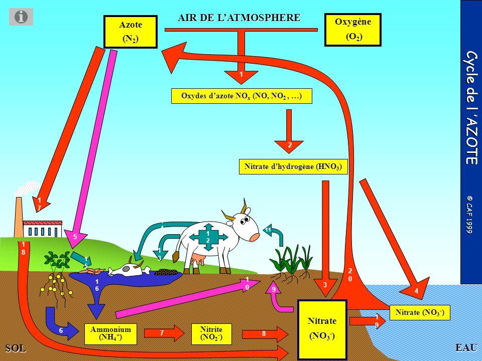 EAU AIR DE LATMOSPHERE Oxygène (O 2 ) FIN DU DIAPORAMA Rejet des excréments Consommation des protéines végétales Cycle de l AZOTE © CAF 1999 Azote (N 2 ) SOL Mort des animaux Oxydes dazote NO x (NO, NO 2, …) Fixation artificielle de lazote pour la fabrication dengrais industriels Lessivage du sol Synthèse de protéines animales Mort des végétaux Ammonium (NH 4 + ) Nitrite (NO 2 - ) Décomposeurs : bactéries de la putréfaction et champignons Pénétration du nitrate suite au fumage artificiel des cultures Bactéries dénitrifiantes Nitrate d hydrogène (HNO 3 ) Nitrate (NO 3 - ) Nitrate (NO 3 - )