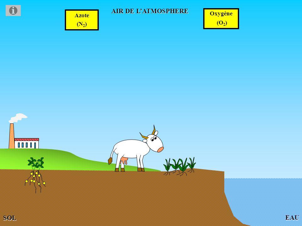 EAU AIR DE LATMOSPHERE Azote (N 2 ) Oxygène (O 2 ) SOL