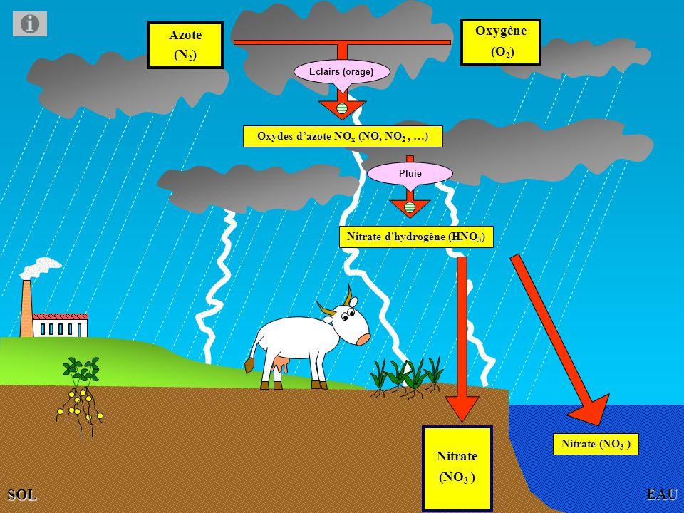 AIR DE LATMOSPHERE EAU Azote (N 2 ) Oxygène (O 2 ) Oxydes dazote NO x (NO, NO 2, …) SOL Eclairs (orage) Nitrate (NO 3 - ) Nitrate (NO 3 - ) Pluie Nitrate d hydrogène (HNO 3 )