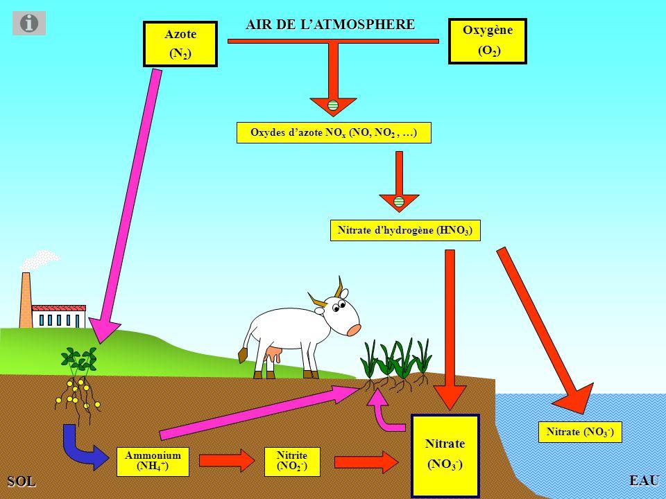 EAU AIR DE LATMOSPHERE Azote (N 2 ) Oxygène (O 2 ) Oxydes dazote NO x (NO, NO 2, …) SOL Nitrate (NO 3 - ) Nitrate (NO 3 - ) Fixation de lazote par les bactéries symbiotiques des nodosités des racines de légumineuses, par les cyanobactéries et par des bactéries libres Ammonium (NH 4 + ) Nitrite (NO 2 - ) Bactéries symbiotiques, libres et cyanobactéries Bactéries nitrifiantes Absorption pour produire des protéines végétales Nitrate d hydrogène (HNO 3 )