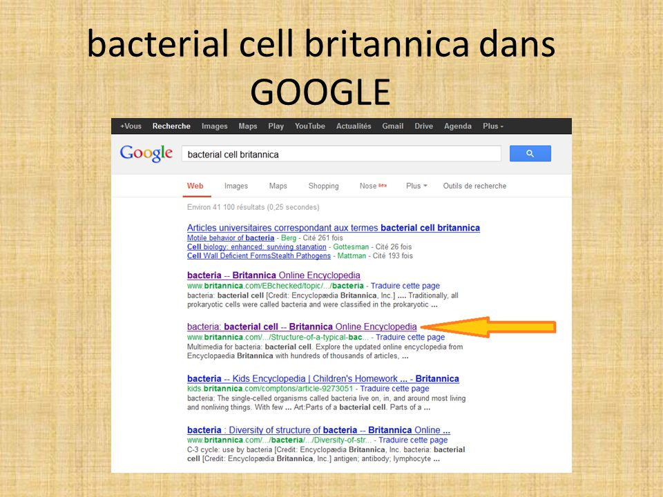 bacterial cell britannica dans GOOGLE