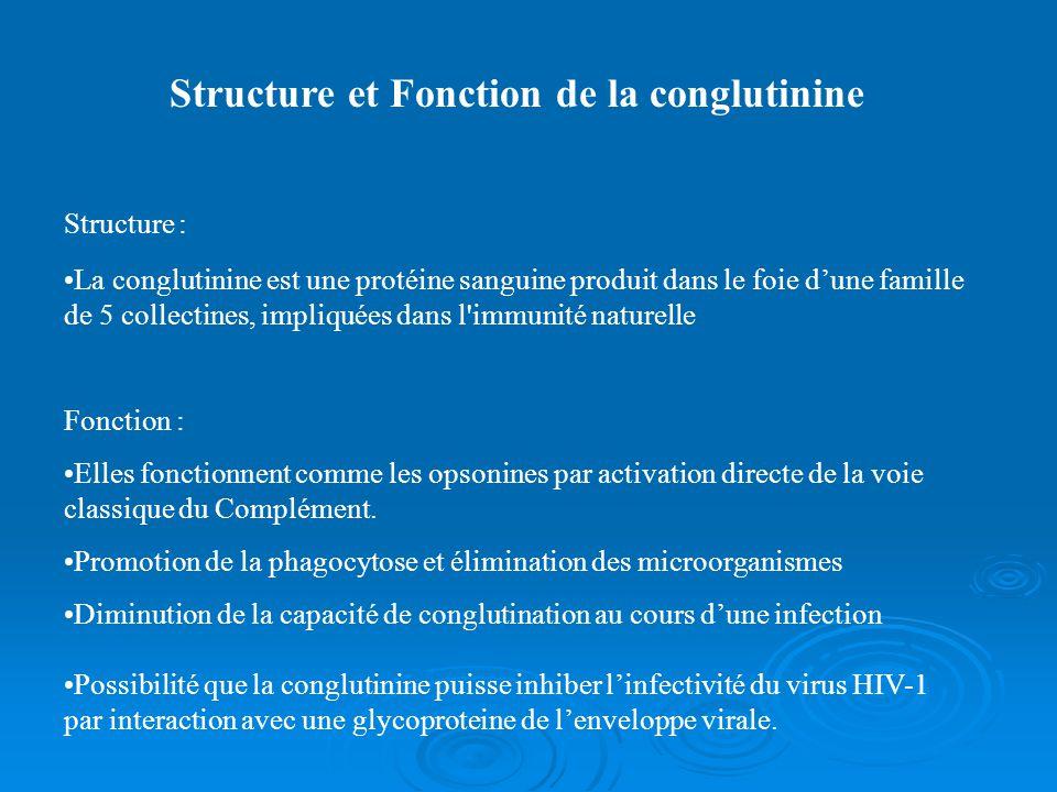 Structure et Fonction de la conglutinine Structure : La conglutinine est une protéine sanguine produit dans le foie dune famille de 5 collectines, impliquées dans l immunité naturelle Fonction : Elles fonctionnent comme les opsonines par activation directe de la voie classique du Complément.