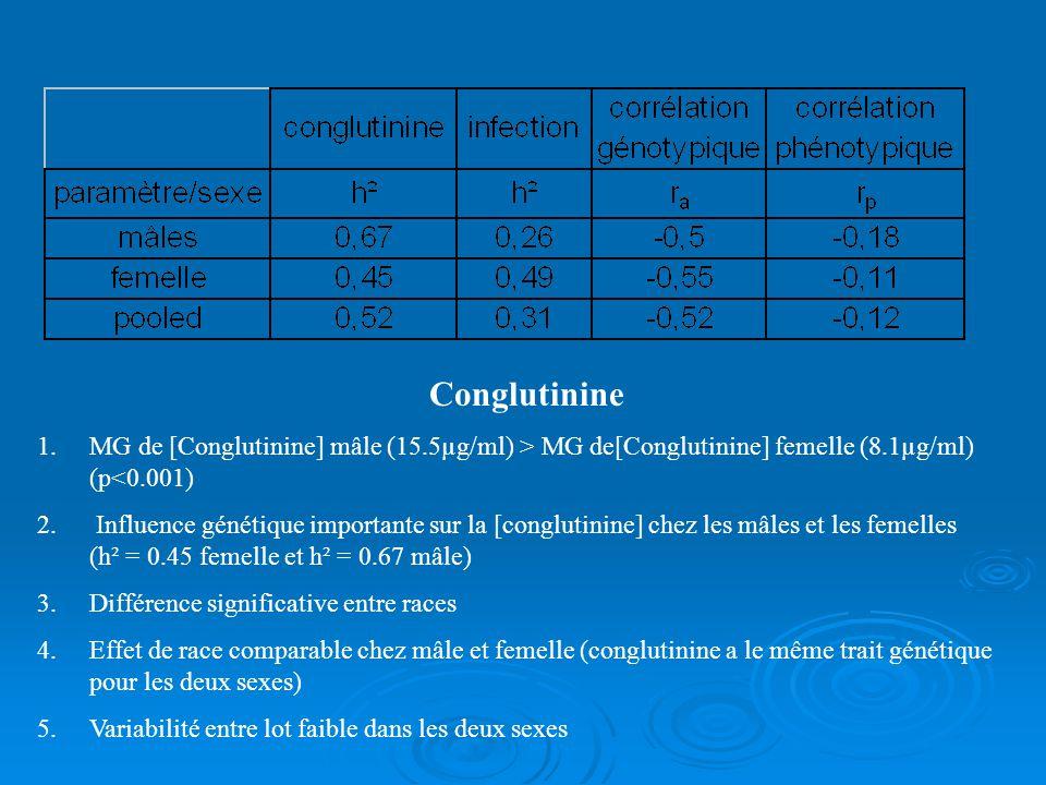 Conglutinine 1.MG de [Conglutinine] mâle (15.5µg/ml) > MG de[Conglutinine] femelle (8.1µg/ml) (p<0.001) 2. Influence génétique importante sur la [cong