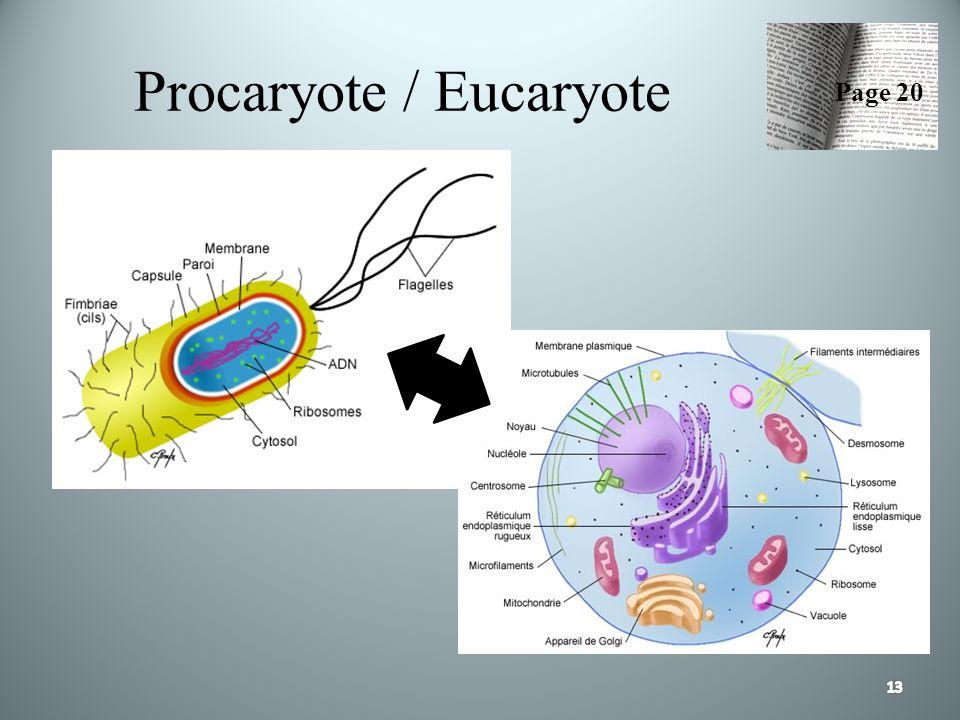 Procaryote / Eucaryote Page 20
