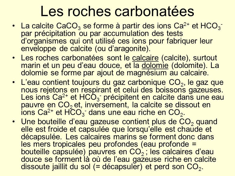 Les roches carbonatées La calcite CaCO 3 se forme à partir des ions Ca 2+ et HCO 3 - par précipitation ou par accumulation des tests dorganismes qui o