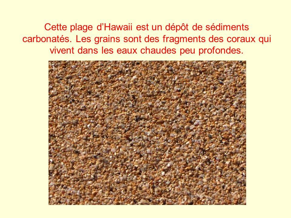 Cette plage dHawaii est un dépôt de sédiments carbonatés. Les grains sont des fragments des coraux qui vivent dans les eaux chaudes peu profondes.