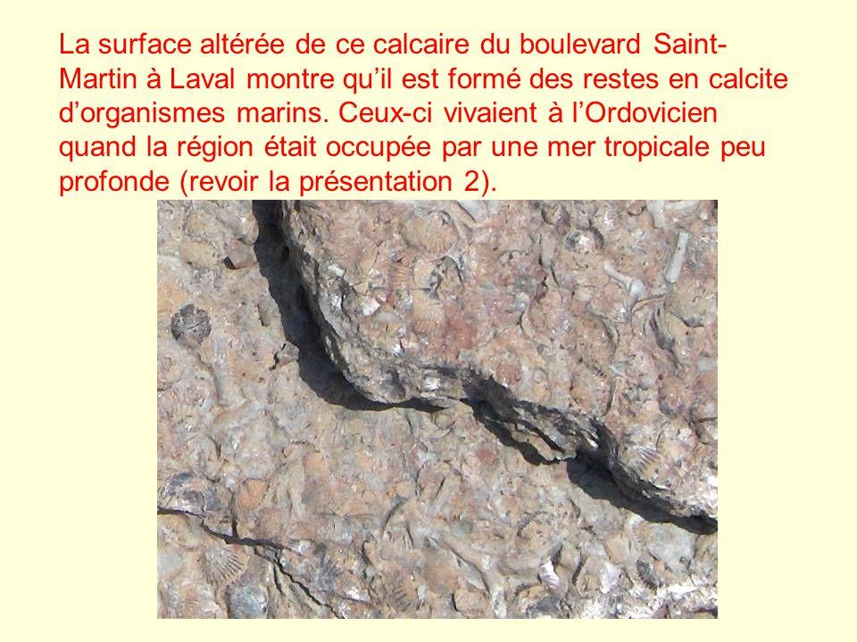 La surface altérée de ce calcaire du boulevard Saint- Martin à Laval montre quil est formé des restes en calcite dorganismes marins. Ceux-ci vivaient