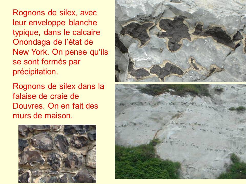 Rognons de silex, avec leur enveloppe blanche typique, dans le calcaire Onondaga de létat de New York. On pense quils se sont formés par précipitation