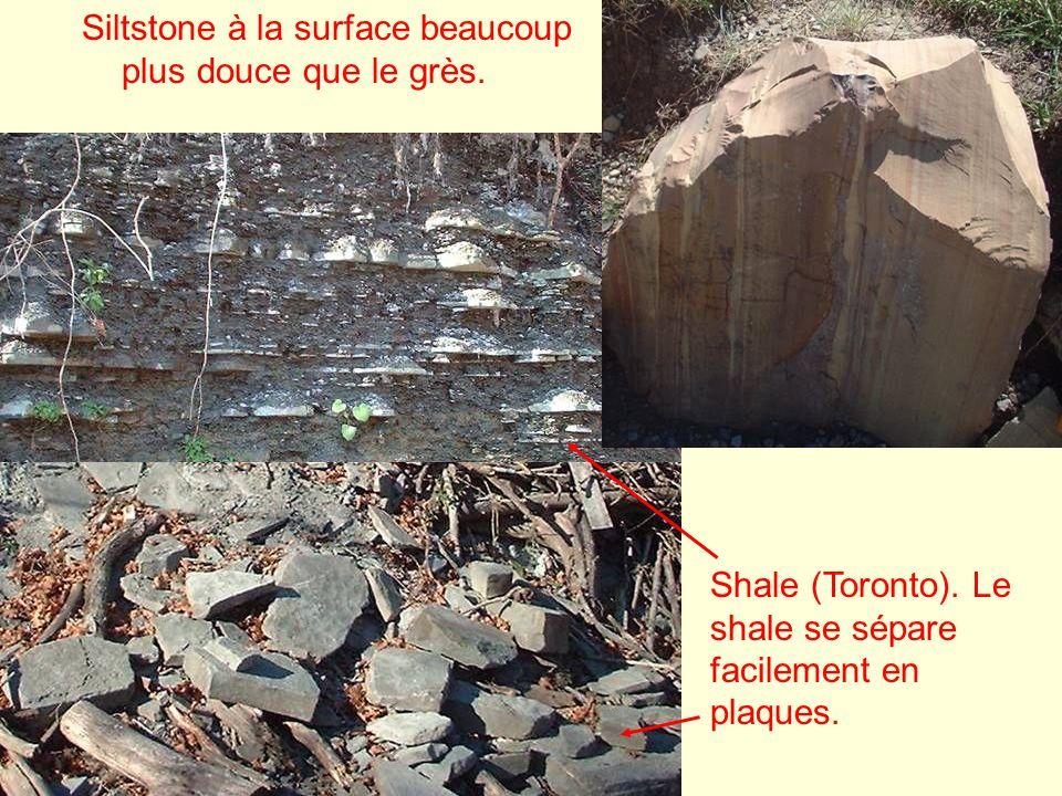 Siltstone à la surface beaucoup plus douce que le grès. Shale (Toronto). Le shale se sépare facilement en plaques.