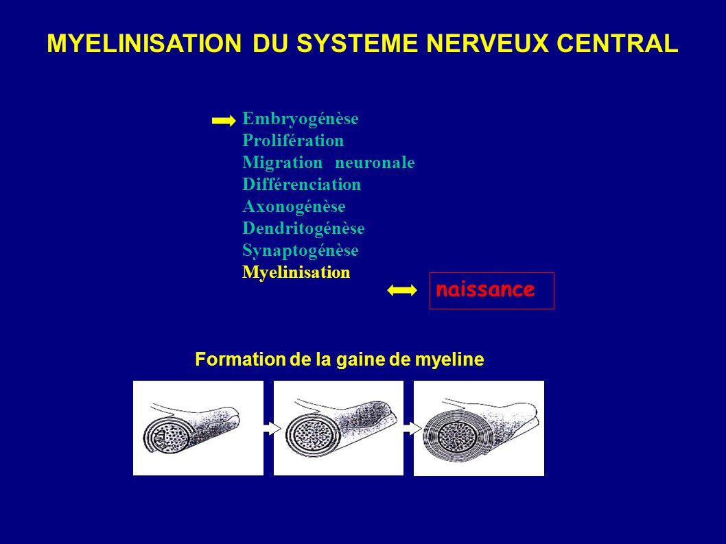 Formation de la gaine de myeline MYELINISATION DU SYSTEME NERVEUX CENTRAL Embryogénèse Prolifération Migration neuronale Différenciation Axonogénèse D