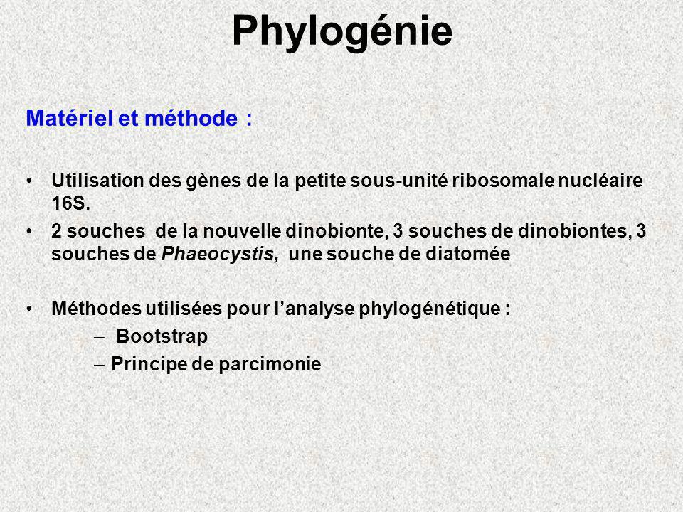 Phylogénie Matériel et méthode : Utilisation des gènes de la petite sous-unité ribosomale nucléaire 16S.