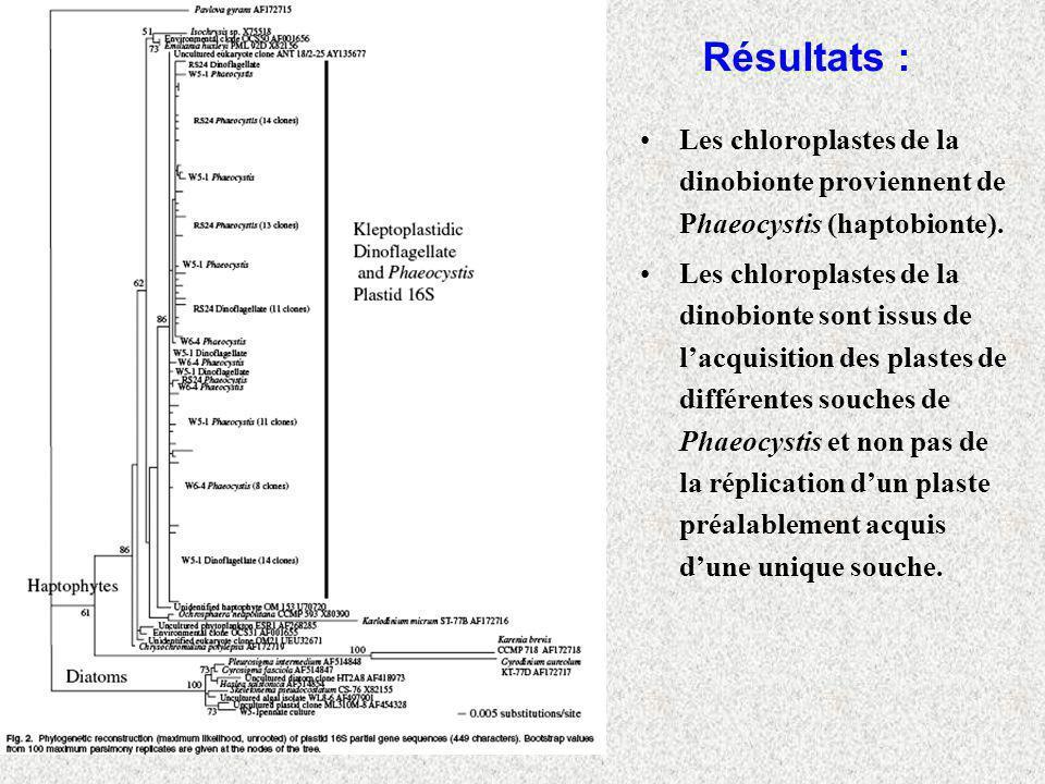 Résultats : Les chloroplastes de la dinobionte proviennent de Phaeocystis (haptobionte).