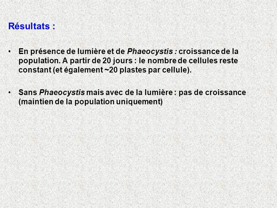 Résultats : En présence de lumière et de Phaeocystis : croissance de la population.