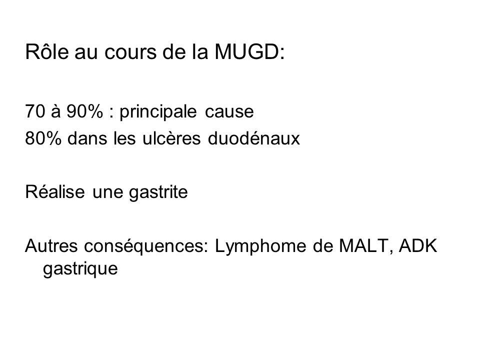 Rôle au cours de la MUGD: 70 à 90% : principale cause 80% dans les ulcères duodénaux Réalise une gastrite Autres conséquences: Lymphome de MALT, ADK g