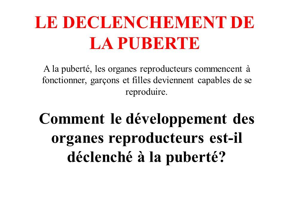 LE DECLENCHEMENT DE LA PUBERTE A la puberté, les organes reproducteurs commencent à fonctionner, garçons et filles deviennent capables de se reproduir