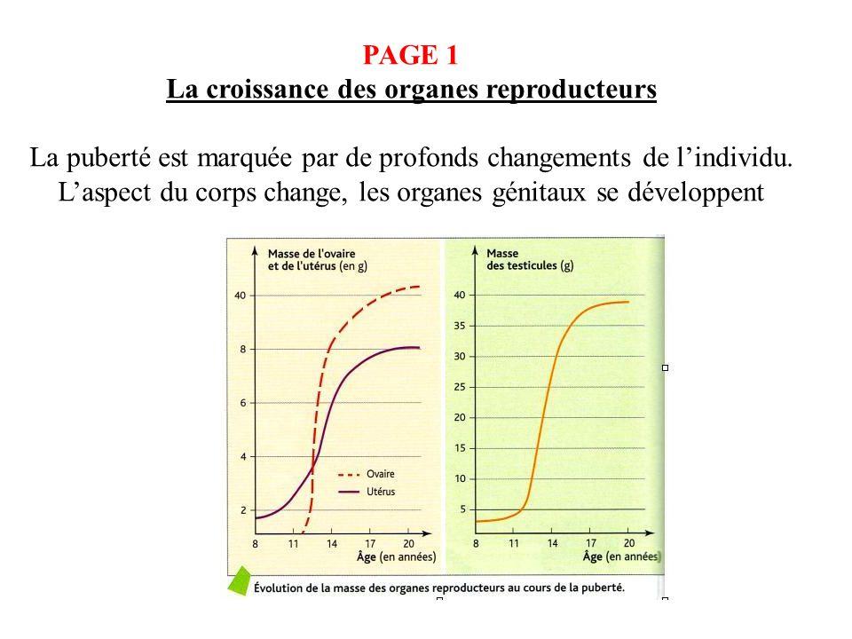 PAGE 1 La croissance des organes reproducteurs La puberté est marquée par de profonds changements de lindividu. Laspect du corps change, les organes g