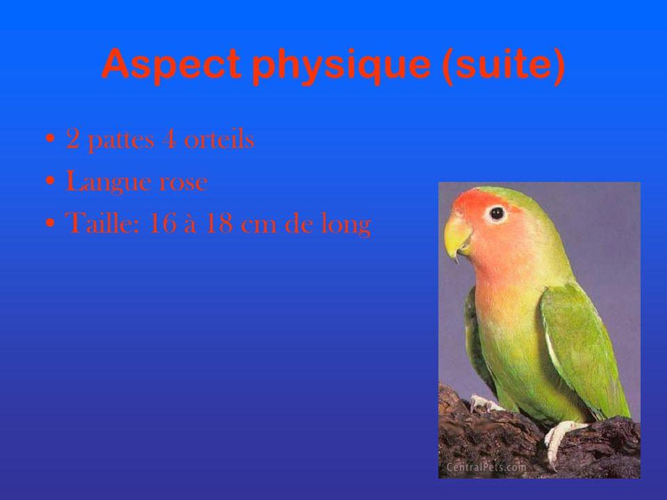 Aspect physique (suite) 2 pattes 4 orteils Langue rose Taille: 16 à 18 cm de long