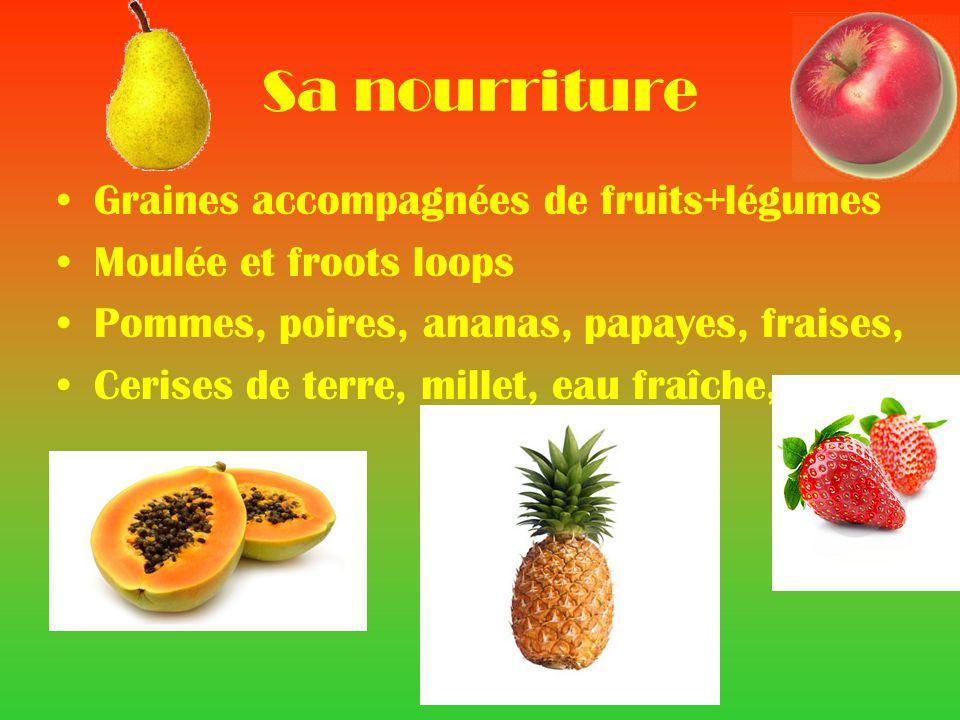 Sa nourriture Graines accompagnées de fruits+légumes Moulée et froots loops Pommes, poires, ananas, papayes, fraises, Cerises de terre, millet, eau fraîche,
