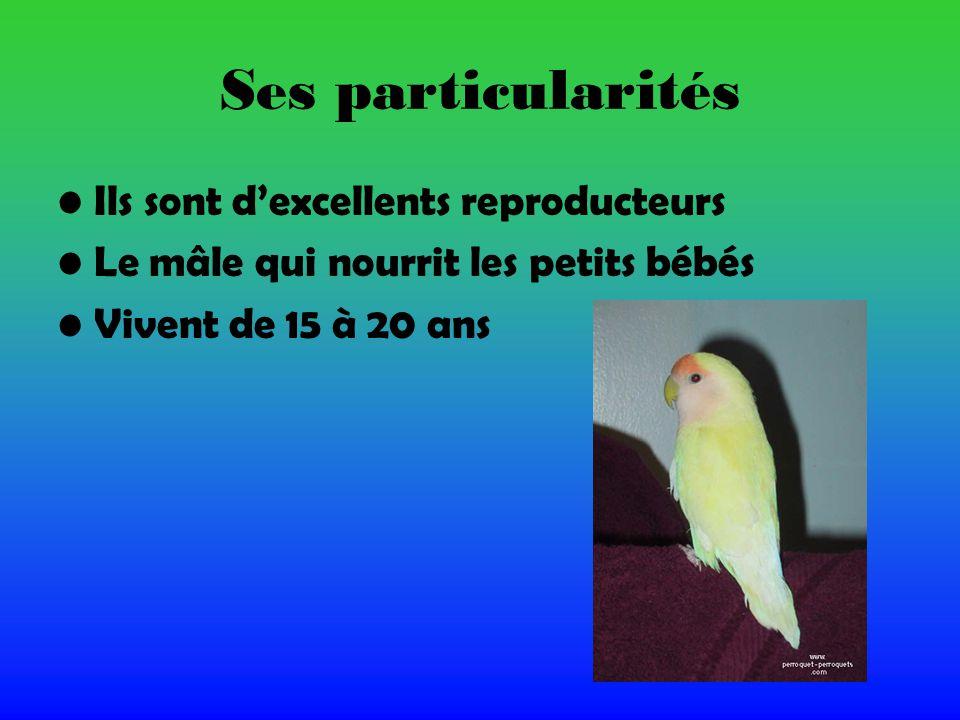 Ses particularités Ils sont dexcellents reproducteurs Le mâle qui nourrit les petits bébés Vivent de 15 à 20 ans