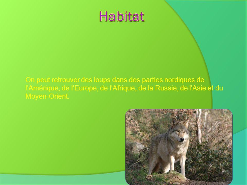 On peut retrouver des loups dans des parties nordiques de lAmérique, de lEurope, de lAfrique, de la Russie, de lAsie et du Moyen-Orient.