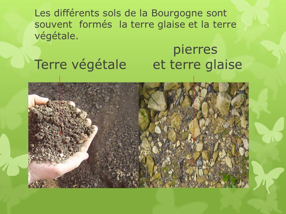 Les différents sols de la Bourgogne sont souvent formés la terre glaise et la terre végétale. pierres Terre végétale et terre glaise
