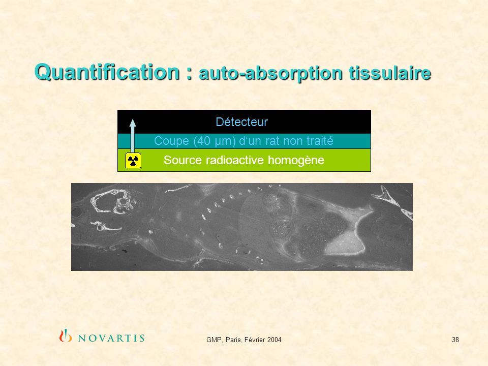GMP, Paris, Février 200438 Quantification : auto-absorption tissulaire Détecteur Source radioactive homogène Coupe (40 µm) dun rat non traité
