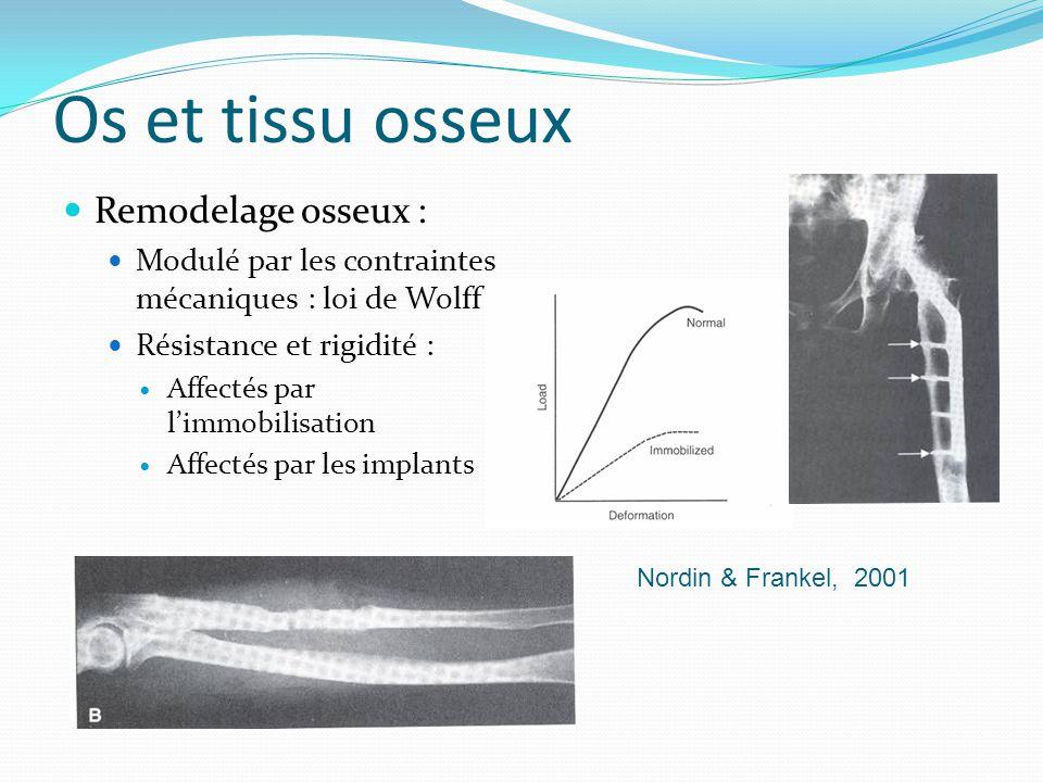 Os et tissu osseux Remodelage osseux : Modulé par les contraintes mécaniques : loi de Wolff Résistance et rigidité : Affectés par limmobilisation Affe