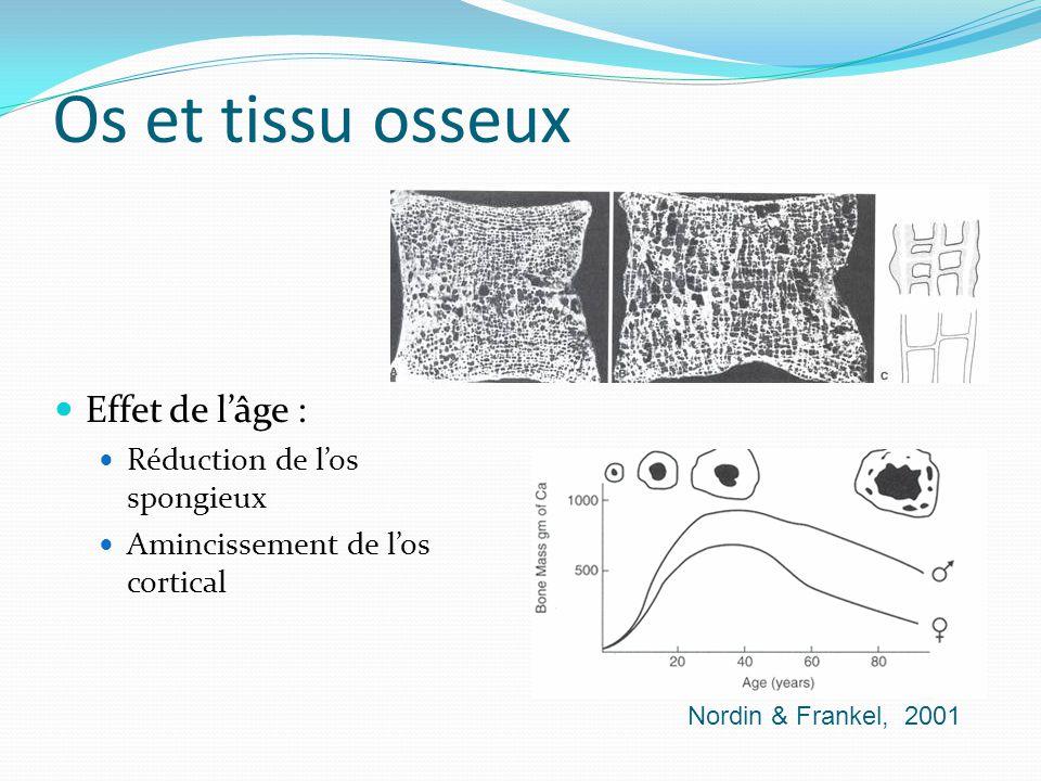 Os et tissu osseux Effet de lâge : Réduction de los spongieux Amincissement de los cortical Nordin & Frankel, 2001