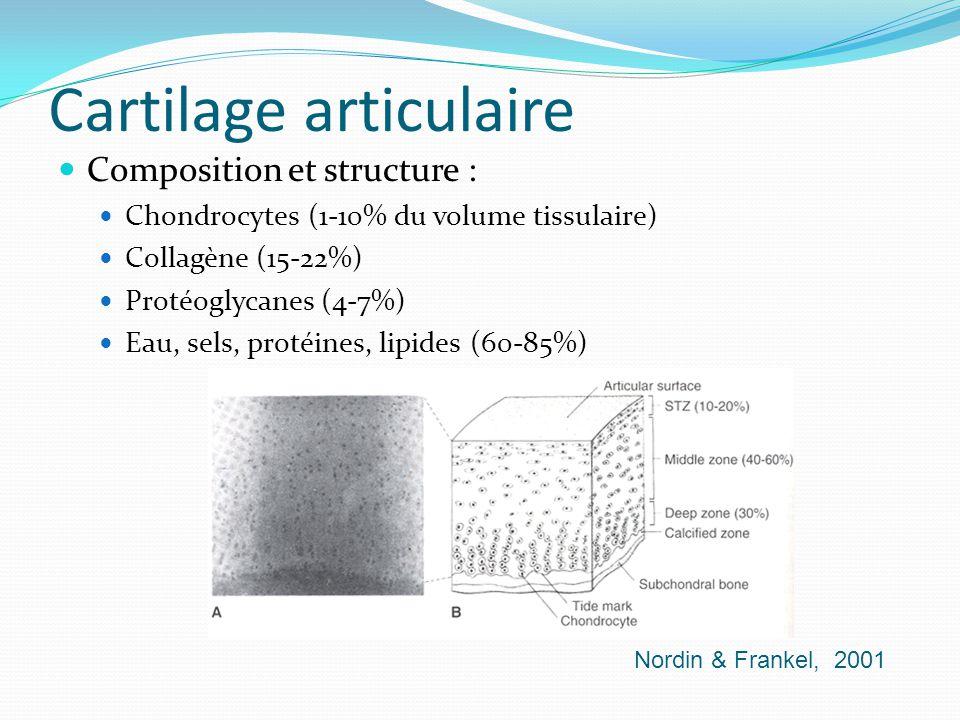 Cartilage articulaire Composition et structure : Chondrocytes (1-10% du volume tissulaire) Collagène (15-22%) Protéoglycanes (4-7%) Eau, sels, protéin