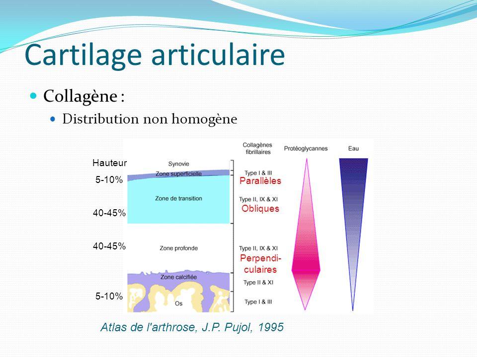 Cartilage articulaire Collagène : Distribution non homogène Atlas de l'arthrose, J.P. Pujol, 1995 Hauteur 5-10% 40-45% 5-10% Parallèles Obliques Perpe