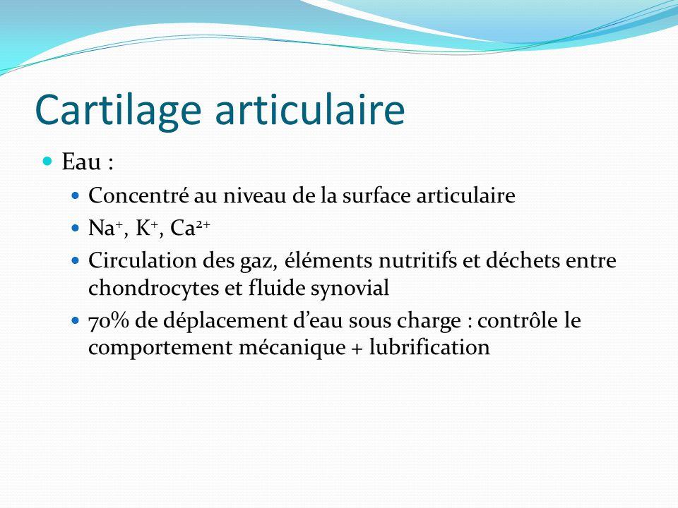 Cartilage articulaire Eau : Concentré au niveau de la surface articulaire Na +, K +, Ca 2+ Circulation des gaz, éléments nutritifs et déchets entre ch