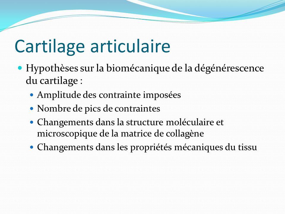 Cartilage articulaire Hypothèses sur la biomécanique de la dégénérescence du cartilage : Amplitude des contrainte imposées Nombre de pics de contraint