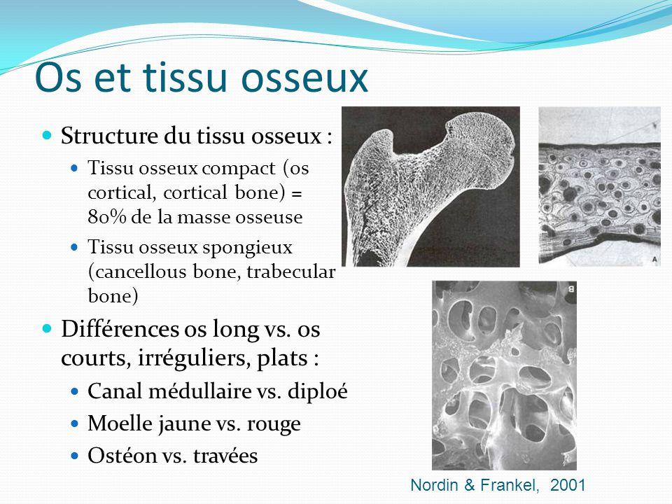 Os et tissu osseux Structure du tissu osseux : Tissu osseux compact (os cortical, cortical bone) = 80% de la masse osseuse Tissu osseux spongieux (can
