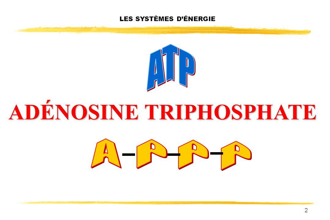 2 LES SYSTÈMES DÉNERGIE ADÉNOSINE TRIPHOSPHATE