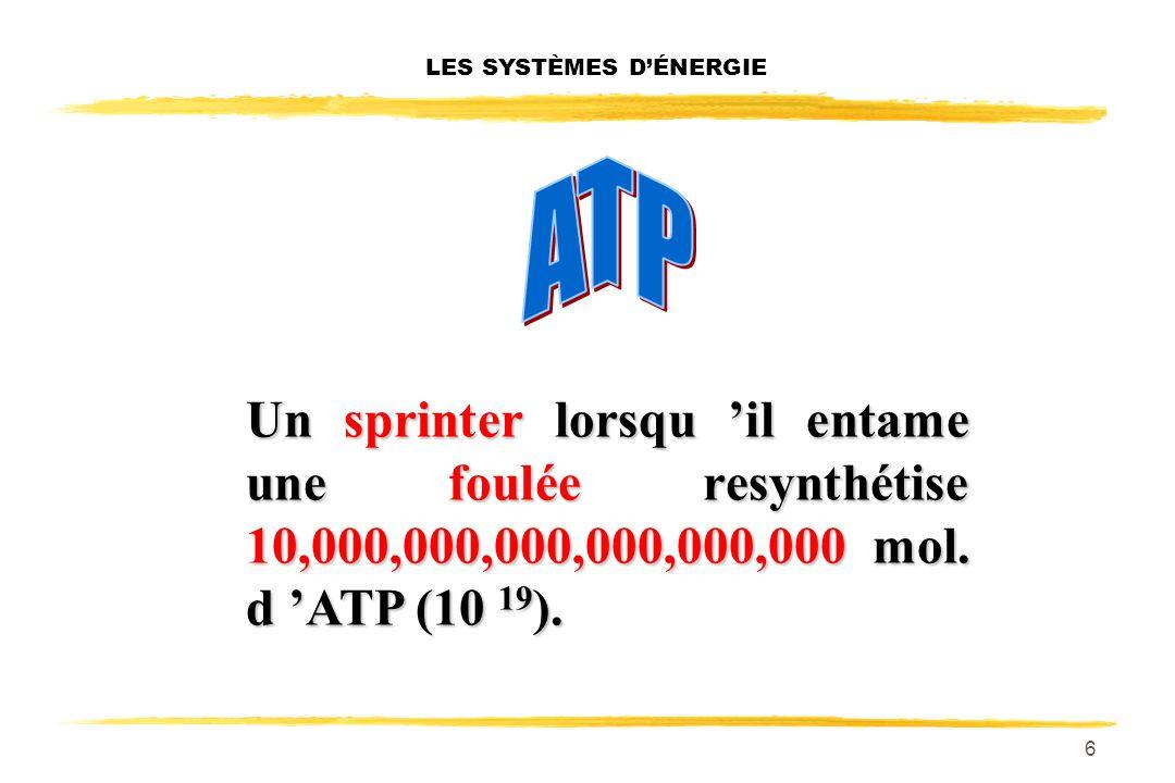 5 LES SYSTÈMES DÉNERGIE Moins de 100 gr d ATP pour l ensemble de l organisme: environ 60 gr pour l ensemble des muscles chez une personne moyenne.