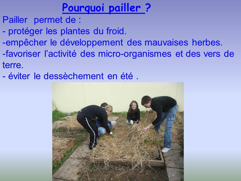 Pourquoi pailler ? Pailler permet de : - protéger les plantes du froid. -empêcher le développement des mauvaises herbes. -favoriser lactivité des micr