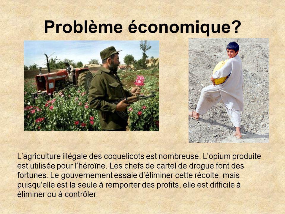 Problème économique.Lagriculture illégale des coquelicots est nombreuse.