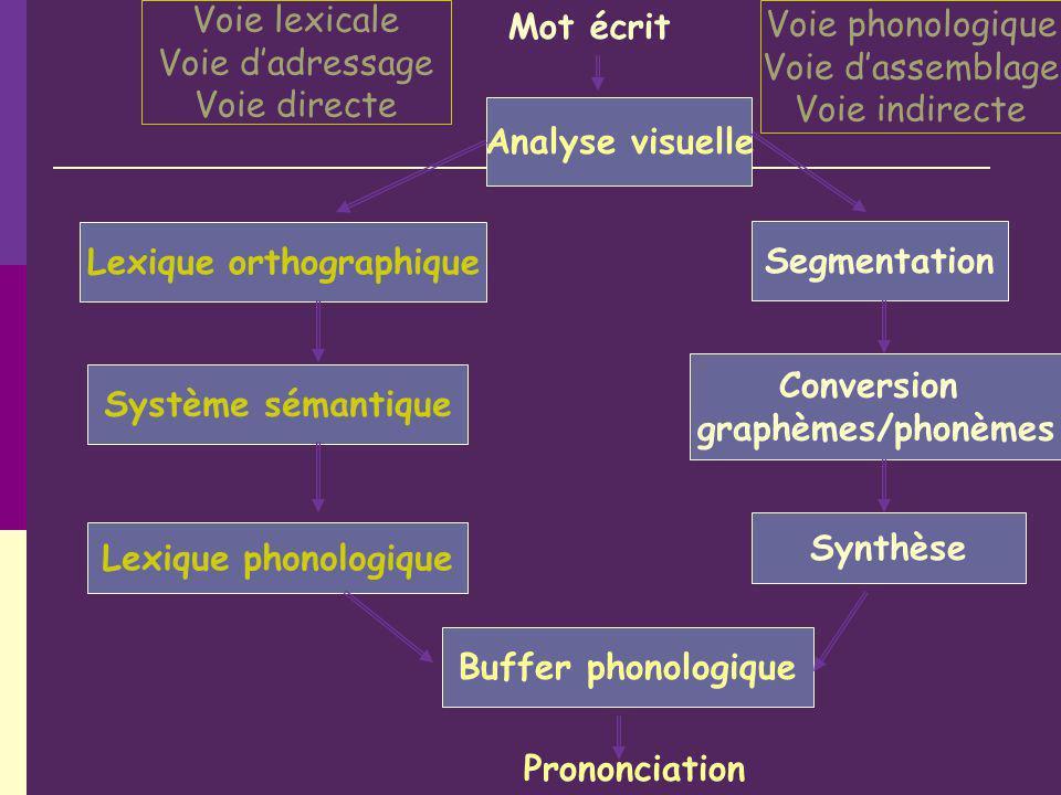 Analyse visuelle Lexique orthographique Système sémantique Lexique phonologique Mot écrit Segmentation Conversion graphèmes/phonèmes Synthèse Buffer p