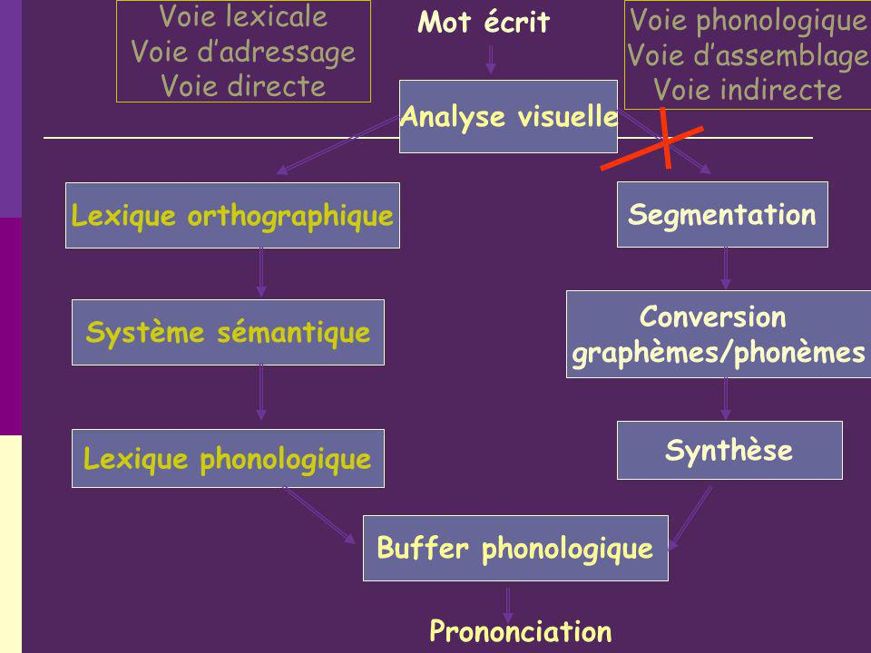 Analyse visuelle Lexique orthographique Système sémantique Lexique phonologique Mot écrit Segmentation Conversion graphèmes/phonèmes Synthèse Buffer phonologique Prononciation Voie lexicale Voie dadressage Voie directe Voie phonologique Voie dassemblage Voie indirecte