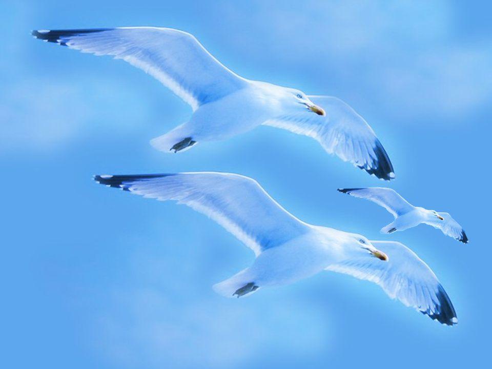 L'envol vers une certaine liberté ne veut pas dire ne plus avoir besoin des autres mais seulement des instants où l'énergie a besoin de se régénérer p